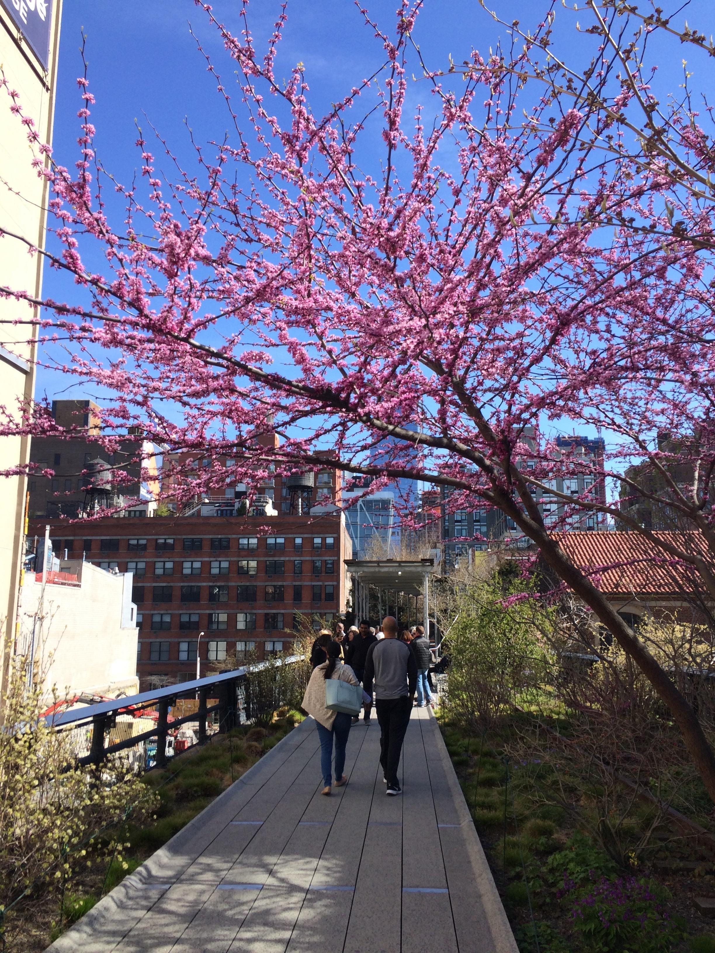 High Linea oli kiva kävellä.